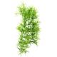 Décor plante Climber Tropica