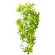 Décor plante Climber Ivy