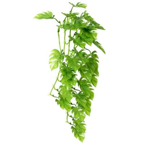Décor plante Climber Philo